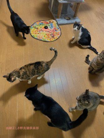 私の猫が6匹集まっています