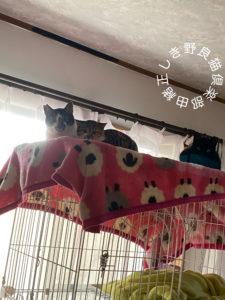 猫がケージの最上階にいる