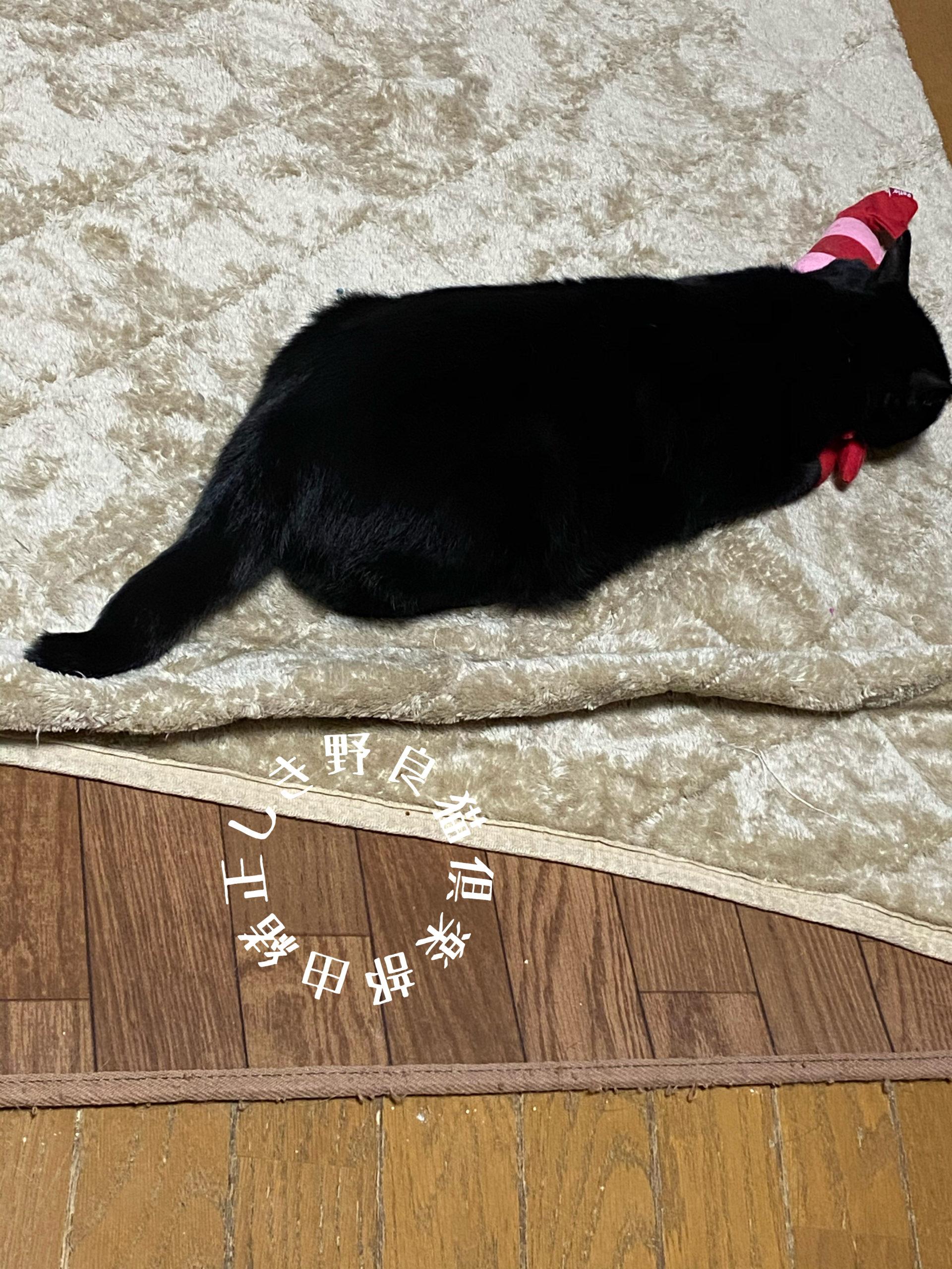 ペティオのけりぐるみを枕にして寝ている猫