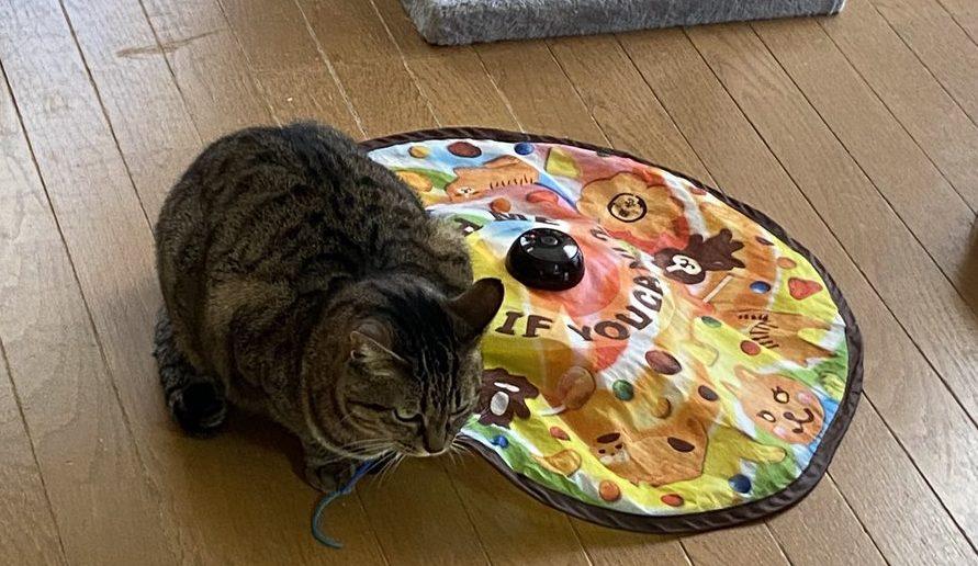 猫と猫のおもちゃです