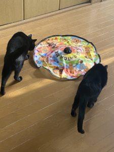 猫たちの期待が高まる猫用品キャッチ・ミー・イフ・ユー・キャン