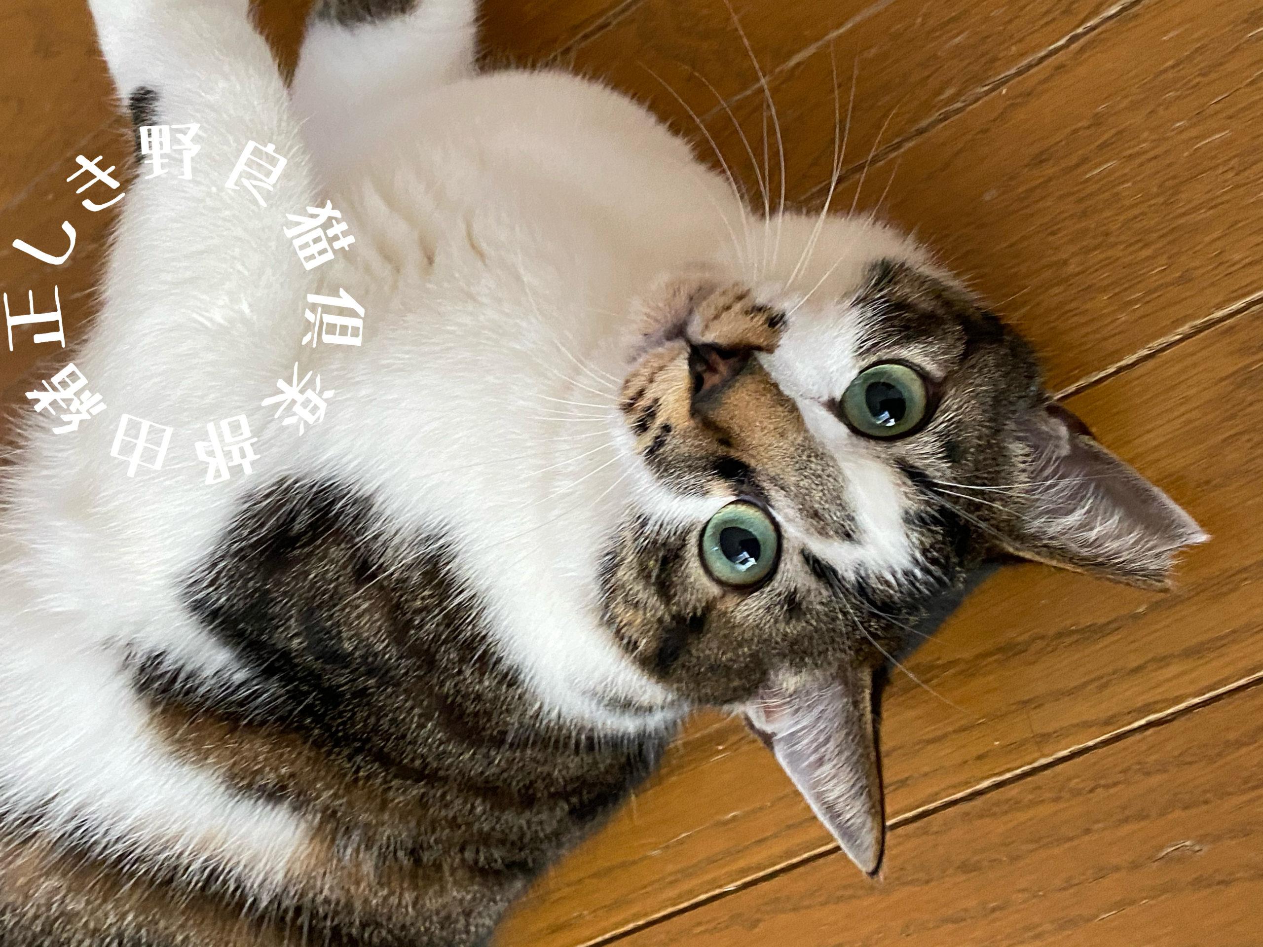 私の家の猫です!