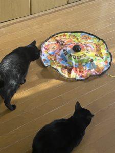 猫用品キャッチ・ミー・イフ・ユー・キャン準備できました