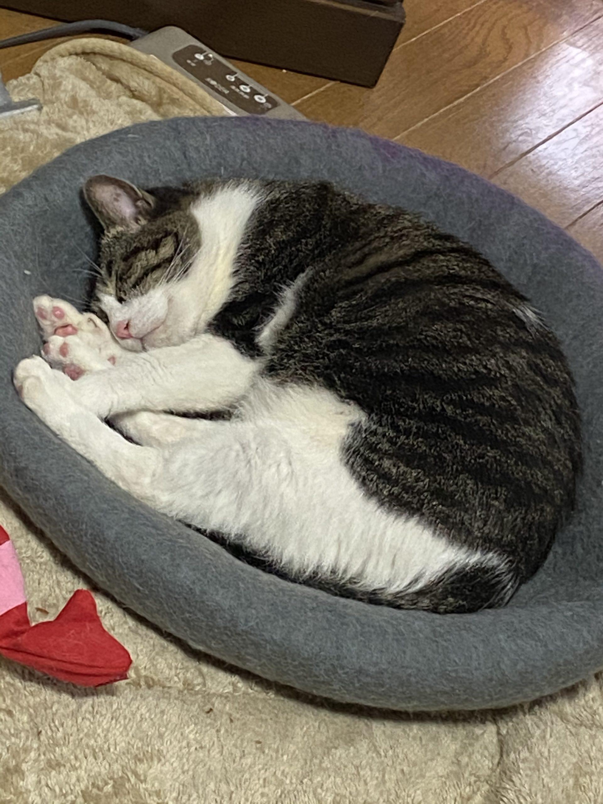 私の猫が寝ています