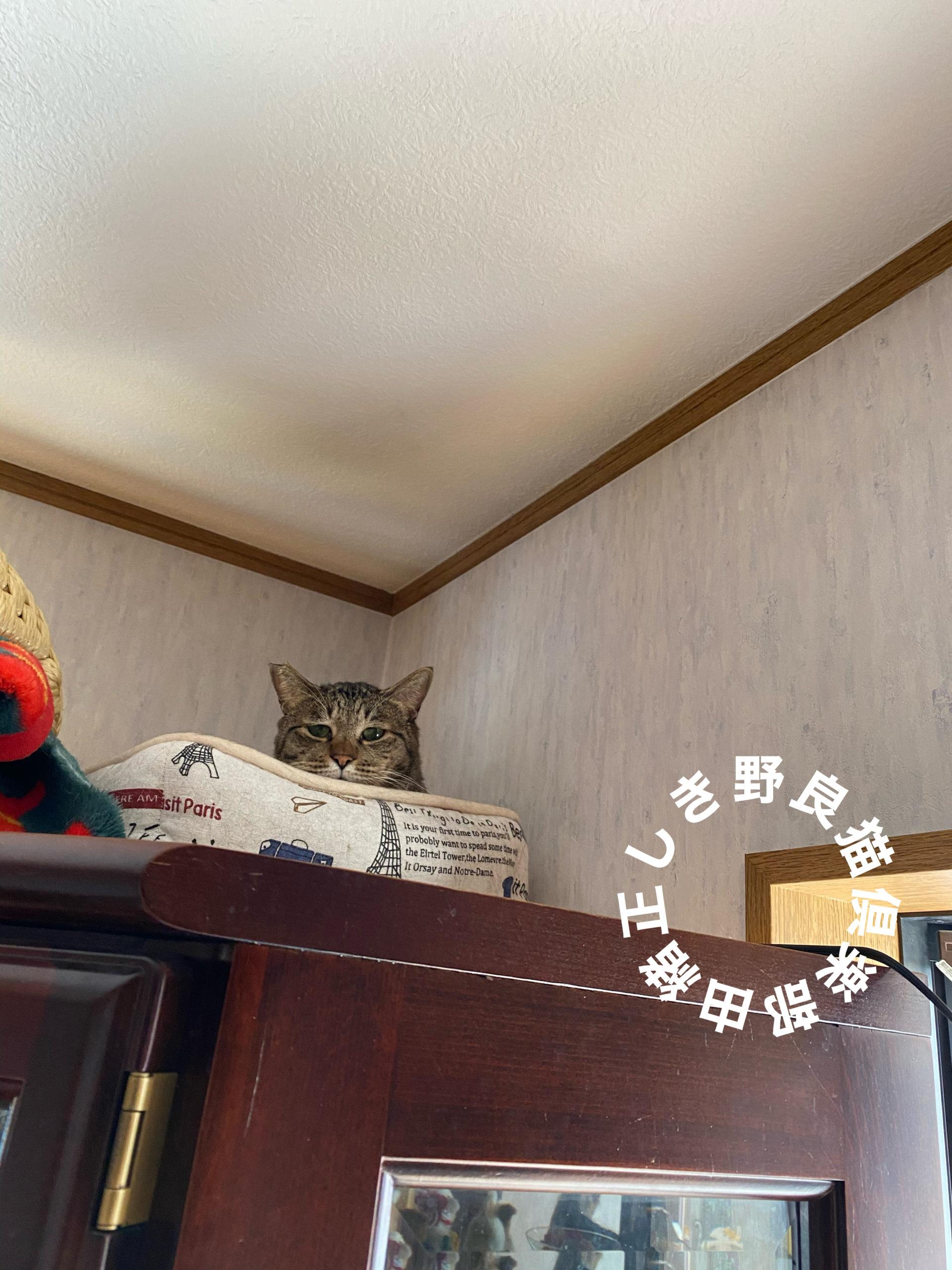 猫が高い所から見下ろしている