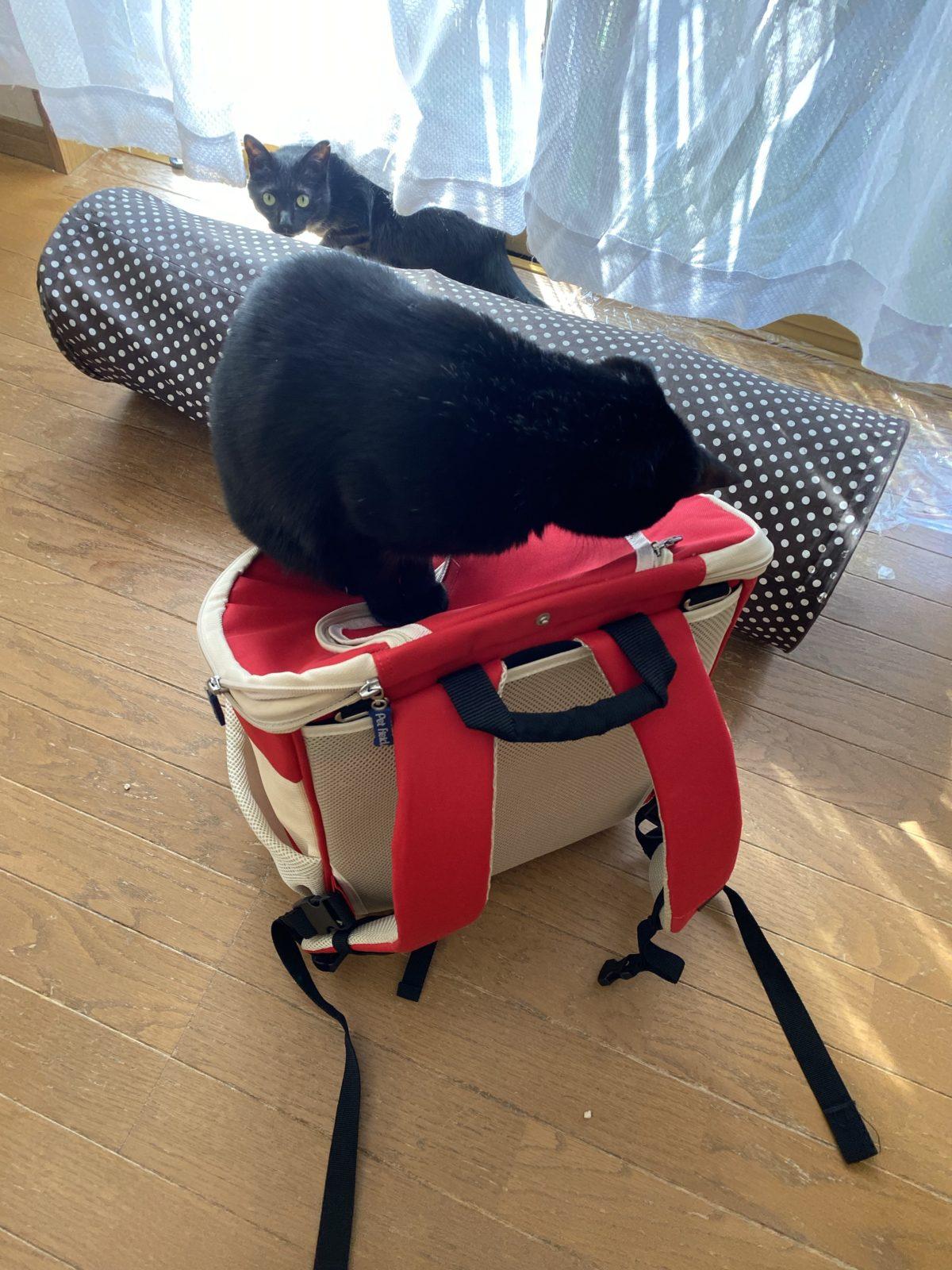 猫を病院へ連れて行く前