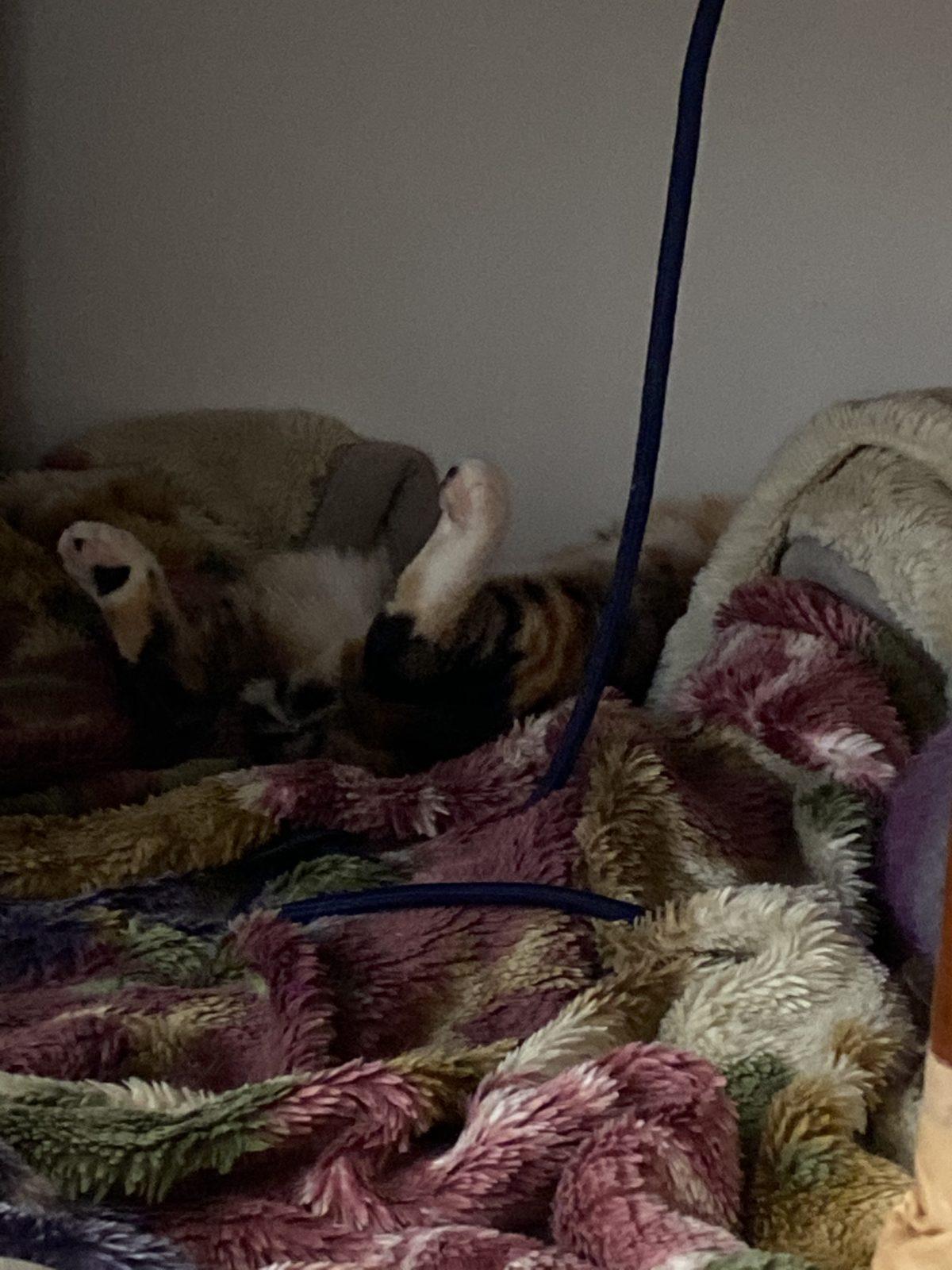 私の家の猫がひっくり返って寝ているところ