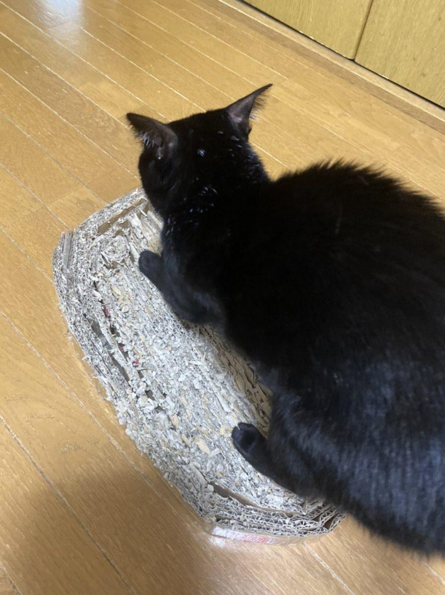 黒猫が爪とぎをしているところ