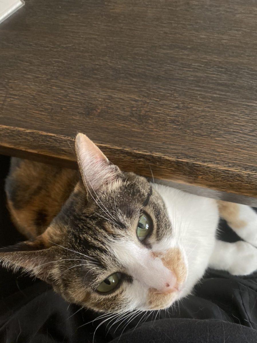 私のひざの上に乗っている猫