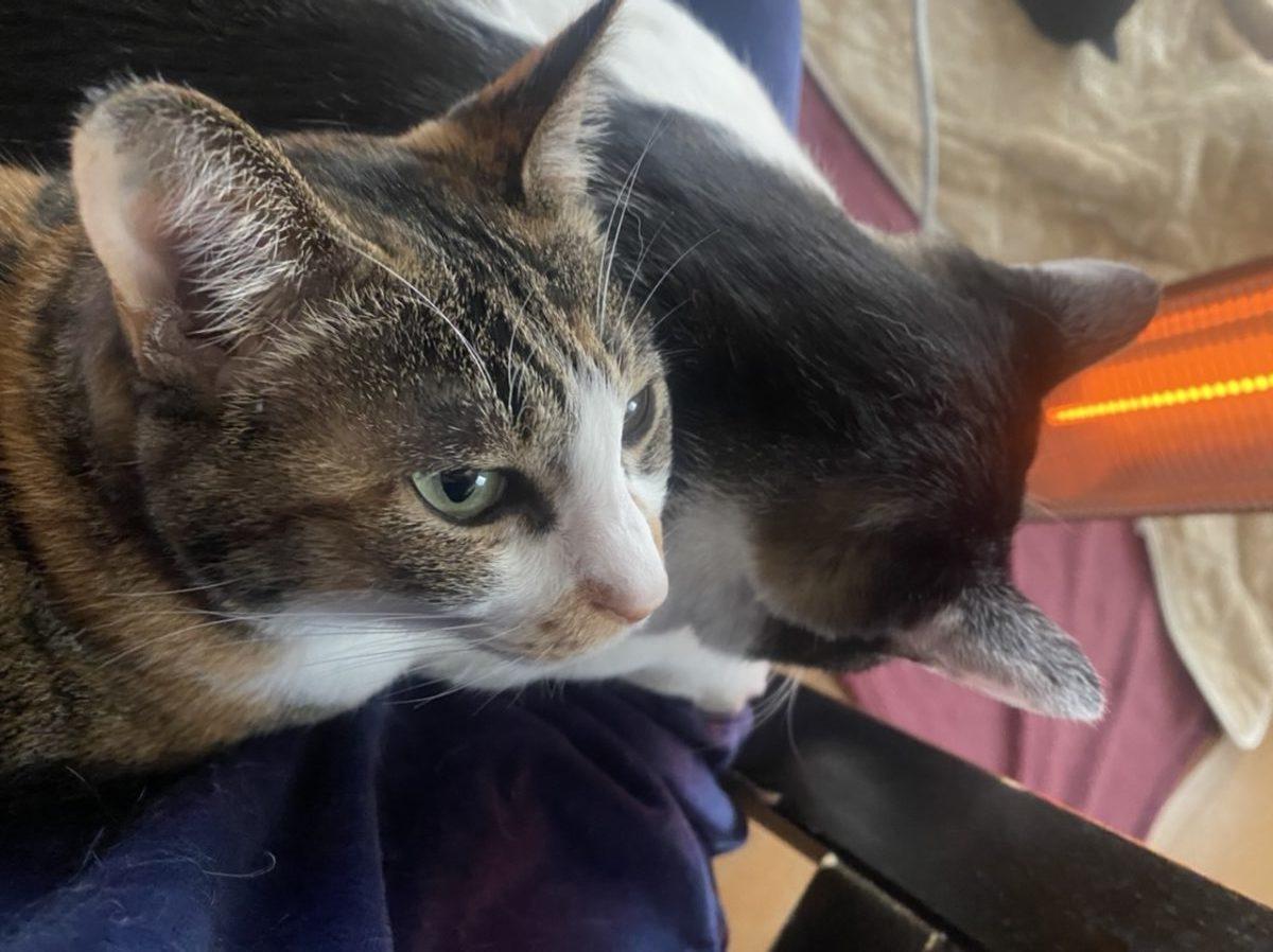 私の猫2匹が膝の上にのっていて重い
